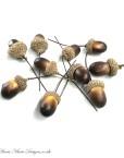 Acorn Berries
