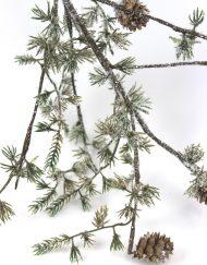 branch-fern-1
