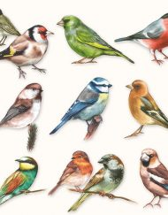 13310165 COLLECTION OF BIRDS napkin